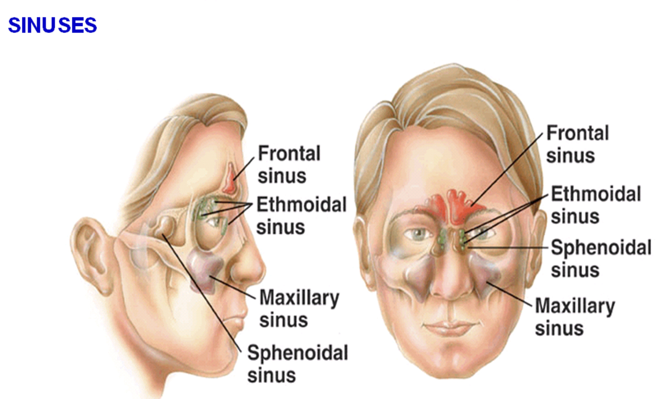 Ethmoid- tends to give pain